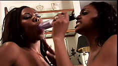 Lovely black lesbians with big boobs eat out each other's cunts all over the couch
