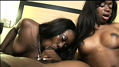 Two striking caramel girls touch themselves and please a black stick