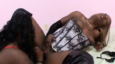 Curvy black beauties Huni and Hershy have some fun licking each other